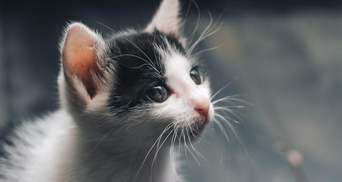 На Троєщині у Києві кішку з чотирма кошенятами викинули з висоти