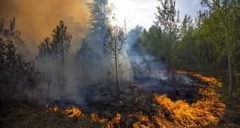 У Росії не вщухають нищівні лісові пожежі: є постраждалі – фото