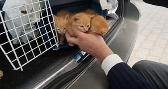 200 євро за кошенят: українець постане перед судом в Угорщині за спробу підкупити митника