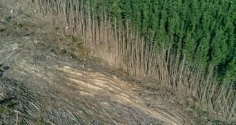 Масове відновлення лісів не допоможе проти кліматичних змін – дослідники