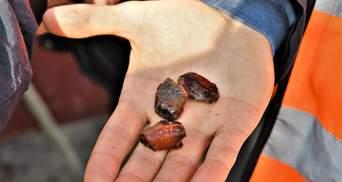 Охота на солнечный камень в Ровненской области начали добывать янтарь