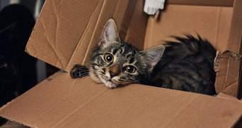 В КНДР начали уничтожать кошек и голубей якобы из-за распространения COVID-19