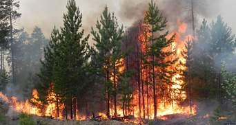 У трьох областях України оголосили надзвичайний рівень пожежної небезпеки
