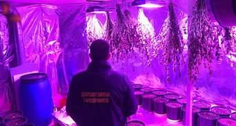 """Підвал із коноплею на 8 мільйонів: на Київщині викрили """"наркотеплицю"""" – відео"""