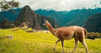 Україна розширила безвізовий режим з Перу: що змінилося