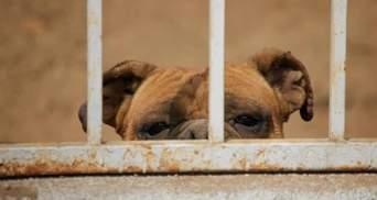 У Житомирі мешканці квартири викинули собаку з балкона