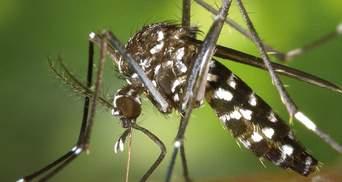 На узбережжі Чорного моря з'явилися тигрові комарі: чому вони небезпечні