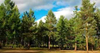 Збільшити площу лісу на мільйон гектарів: Зеленський підписав наказ