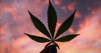 Страшный наркотик или лекарственное средство: вся правда о легализации медицинского каннабиса