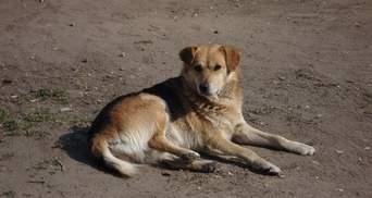 У Києві навмисно наїхали на сплячого собаку: тварина померла одразу
