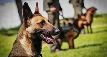 На Вінниччині провели ефектні змагання кінологів: собаки продемонстрували вищий пілотаж