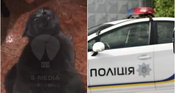 На Хмельниччині поліцейський знущався з кота, бо той не давав йому спати