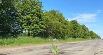 На Вінниччині люди саджають квіти у вибоїни на дорогах: курйозні фото