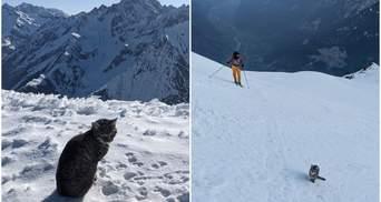 Киця загубилася у горах і здолала висоту у понад 3 тисячі метрів, шукаючи господарів