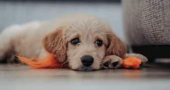 Как сделать ваш дом и сад более безопасными для собаки: важные советы