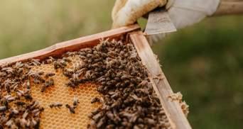 Укуси бджіл, ос та шершнів: що робити, як уникнути та лікувати