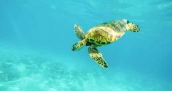 День морських черепах: маловідомі факти про тварин, які можуть зникнути