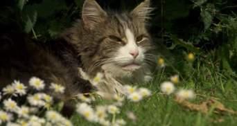 Думали, що загинув: кіт несподівано повернувся до своєї сім'ї, яка його поховала