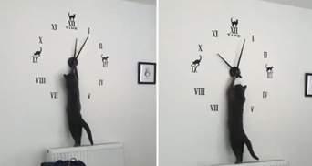 Кошка нагло ускорила время на часах: очень смешное вирусное видео