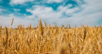Україна переходить у зону надвисоких температур: що загрожує у найближчі десятиліття