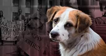 Викидають з вікон, б'ють та відстрілюють: як в Україні знущаються з тварин
