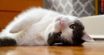 Как сделать жизнь кота безопасной: 8 советов для каждого владельца