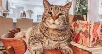 Почти лев: из-за гигантского размера этого кота никто не хотел брать из приюта – фото