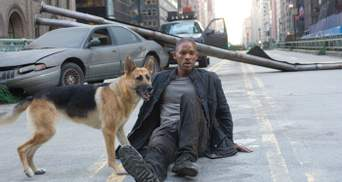 Що ви знаєте про породи собак із кіно: пройдіть тест