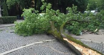 В парке на 7-летнего львовянина упало дерево: он попал в реанимацию