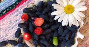 Чому корисна жимолость: цілющі властивості та протипоказання синьої ягоди