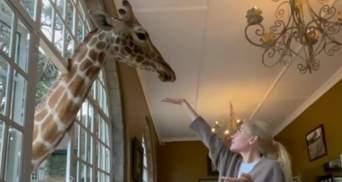 Пасинок Кернеса потішив маму сніданком із жирафами: відео