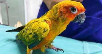 Пернатий грабіжник: папуга вкрав і з'їв 21 діамант з намиста господарки