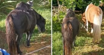 Кот покатался на мини-лошадке: милое видео о дружбе животных
