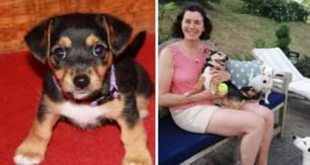 У Великій Британії собаку повернули власниці через 11 років після пропажі