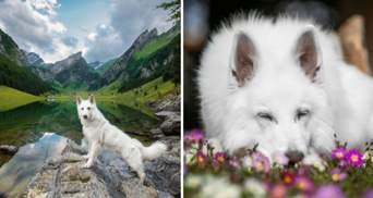 Белый великан: как пес-путешественник из Швейцарии стал звездой соцсетей – фото
