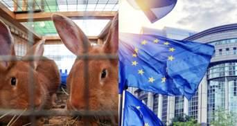 Запретить содержать домашних животных в клетках: ЕС может внести изменения с 2027 года