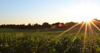 Польські фермери шоковані: яка ситуація з урожаєм у країні