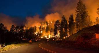 В России масштабный пожар: горит более 900 гектаров леса – фото, видео
