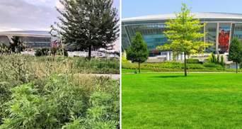 """Дерева висохли, все в бур'янах: у мережі показали фото парку біля """"Донбас Арени"""""""