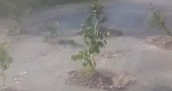 Под Киевом огромные ямы на дороге засадили деревьями вишни: видео