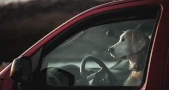 Чому залишати собаку у зачиненому авто у спеку – це смертельний гріх
