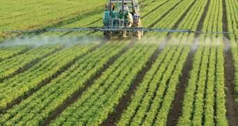 Експерименти з артишоком: українські аграрії протистоять глобальному потеплінню