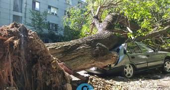 В Одесі впало велике дерево та знищило кілька авто: фото