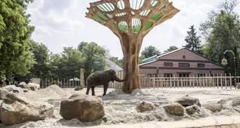 Величезний баобаб у вольєрі: як тепер житиме слон з Київзоо – фото