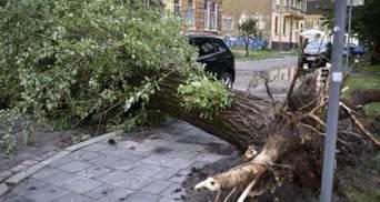 Збитки – 23 мільйони гривень: у Львові ще не оговтались від страшного буревію