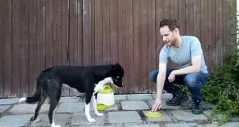 Уже не лучшие друзья: ученые выяснили, что собаки не хотят делиться едой с людьми