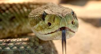 На Львівщині 2 людей потрапили до лікарень через укуси змій