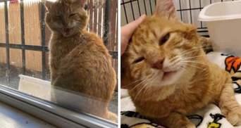 Кіт заліз на вікно і заявив, що йому набридло жити на вулиці: зворушлива історія
