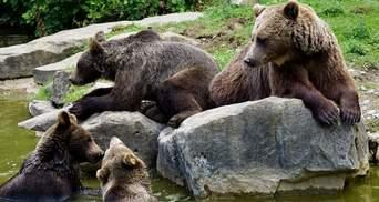 """5 червонокнижних ведмедів незаконнно утримували у """"зоокуточку"""""""