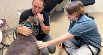 Спасали чужих собак, а нашли свою: история пса, который вернулся домой через 8 лет